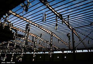 عکس/ تعطیلی کارخانهای 55 ساله در شیروان!