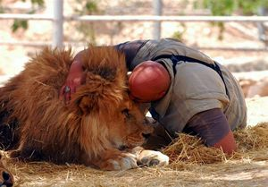 مرگ پیرترین شیر جهان
