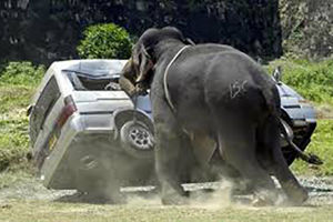 فیلم/لحظات حمله حیوانات غول به پیکر به انسان ها!