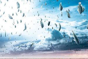 فیلم/ سقوط ماهی های قزل آلا از آسمان!