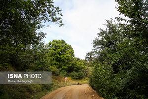 عکس/ جنگلی زیبا در استان سمنان