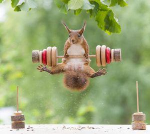 ورزش جالب یک سنجاب!