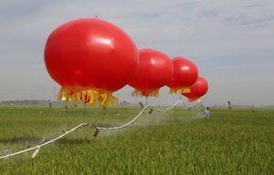 عکس/ خلاقیت کشاورزان چینی در سیستم آبیاری