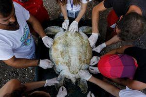نجات لاک پشت های دریایی ترکیه
