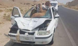 حرکت ارزشمند پرسنل اورژانس پس از تصادف سمند با شتر +عکس