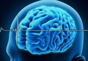 جالبترین حقایق درباره مغز انسان