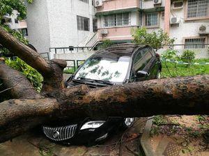 عکس/ شدیدترین طوفان سال به چین رسید