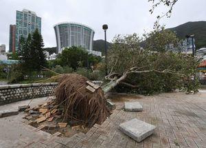 تصاویر جدید از طوفان مرگبار در چین