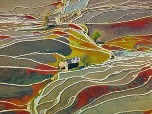 مزرعههای رنگی چین