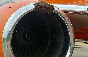 عکس/ هجوم زنبورها به موتور هواپیما !