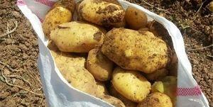 ماجرای فروش سیبزمینی با خاک چه بود؟ +فیلم