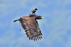 عکس/ کولی گرفتن از عقاب