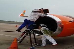 فیلم/ لانه کردن زنبورها در موتور هواپیما!