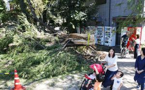 عکس/ طوفان مهیب در ژاپن