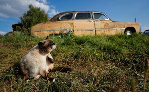 عکس/ گورستان خودروهای قدیمی در روسیه