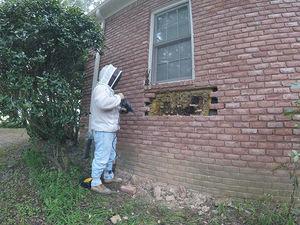 عکس/ مخفیگاه عجیب زنبورها !