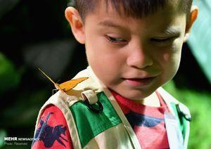عکس/ نمایشگاه پروانهها