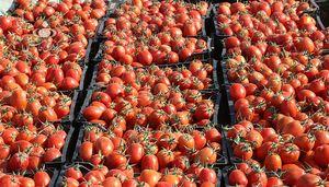 فیلم/ توقیف 450 تن بار قاچاق گوجه!