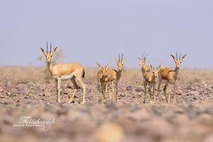 تصویری دیدنی از حیات وحش ایران