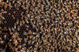 حمله زنبورها به یک اتاق خواب +عکس