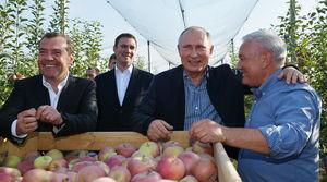 عکس/ پوتین در باغ سیب