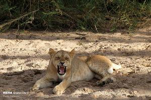عکس/ سفر به حیات وحش تانزانیا