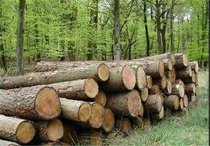ورود مدعی العموم به معضل قاچاق چوب