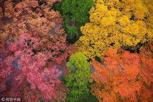 عکس/ جشنواره رنگها در چین