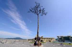 عکس/ تنها درخت باقی مانده از سونامی ژاپن!