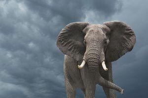 فیلم/ نجات فیل گرفتار در چاه!