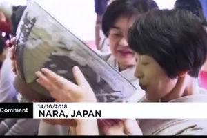 فیلم/ سنت عجیب ژاپنی با قدمت 780 سال!