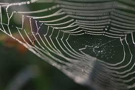 فیلم/ عجیبترین تار عنکبوت جهان!