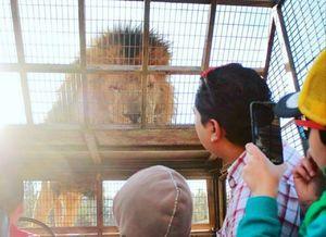 عکس/ باغ وحشی که انسانها را در قفس میکند