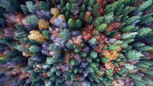 عکس/ نقاشی پاییز