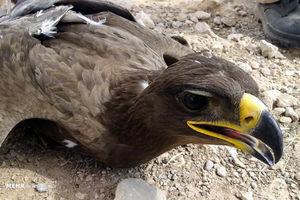 عکس/ مرگ ۲۷ عقاب در سروستان