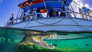 تصویری خیرهکننده از تمساح