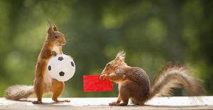 عکس/ پا به توپ شدن سنجاب