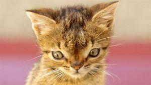 عکس/ گربهی مبتلا به سندروم داون