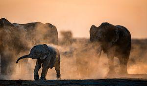 حمام فیلها
