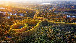 عکس/ گردنبند بزرگ پاییزی