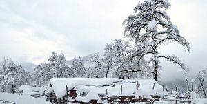 7 استان کشور درگیر برف و کولاک