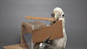 طوطیهایی که از مقوا ابزار میسازند +عکس