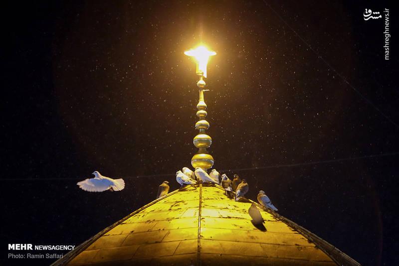 2380325 - حرم رضوی در شب شهادت امام رضا(ع)
