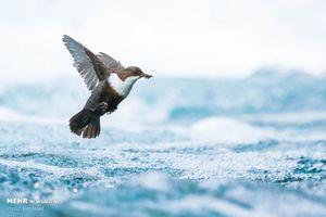 عکس/ مسابقه عکاسی طبیعت در آلمان