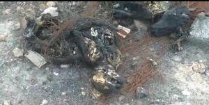 تکذیب کشته شدن و سوزاندن ۳۰۰ سگ در اهواز