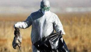 پاسکاری مدیران دولت به نفع شکارچیان