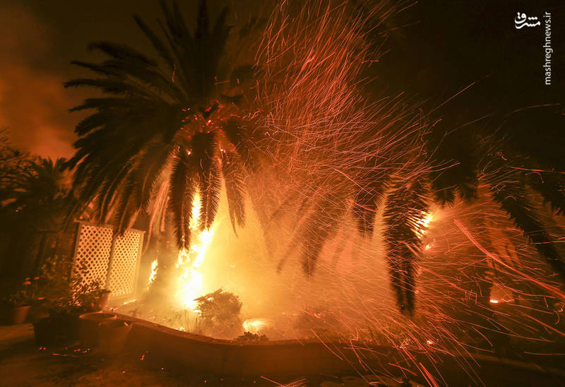 2382907 - مرگبارترین آتش سوزی جنگلهای کالیفرنیا