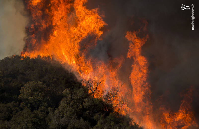 2382909 - مرگبارترین آتش سوزی جنگلهای کالیفرنیا