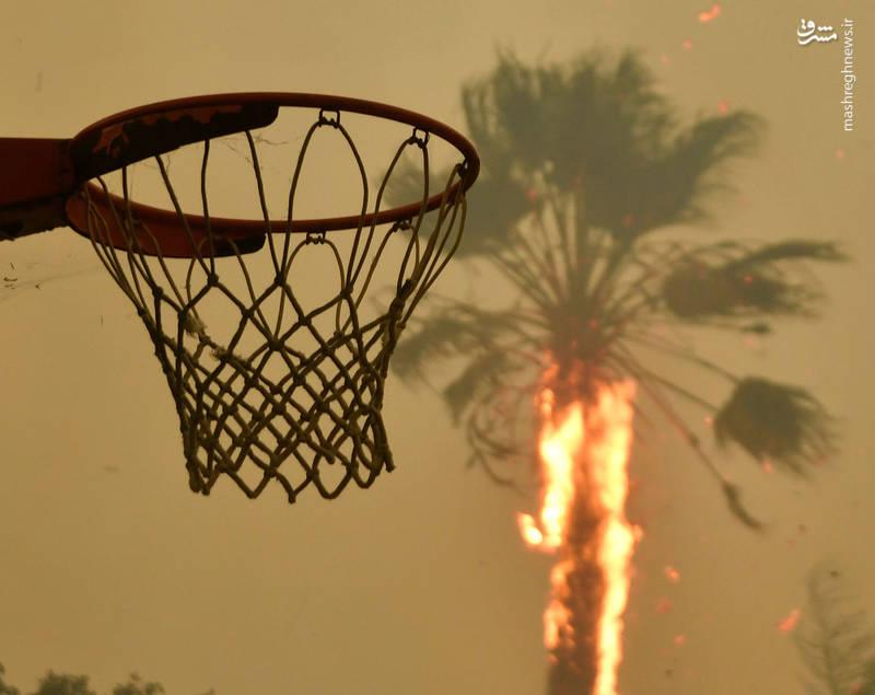 2382911 - مرگبارترین آتش سوزی جنگلهای کالیفرنیا