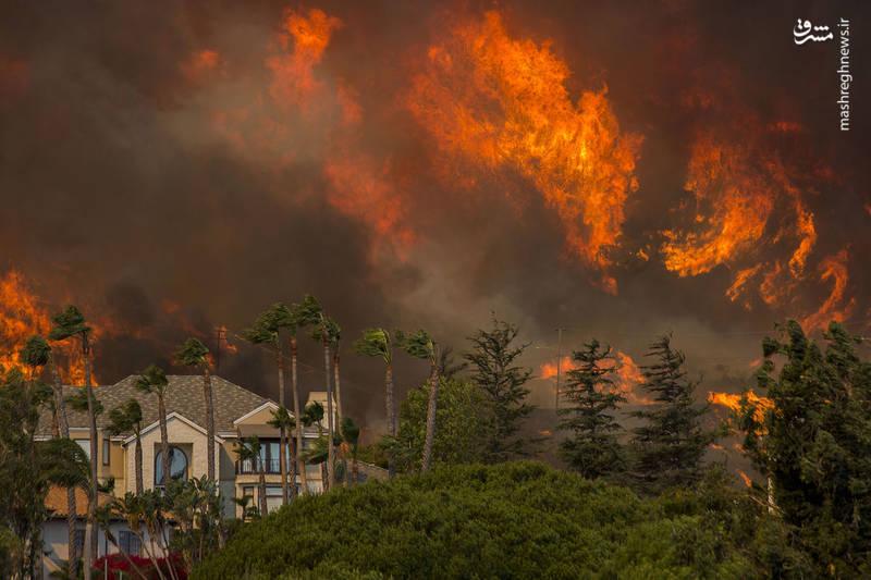 2382912 - مرگبارترین آتش سوزی جنگلهای کالیفرنیا